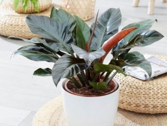 Top 1 cây phong thủy trồng trong nhà, để bàn làm việc hợp mệnh - phauthuatkhuonmat.net